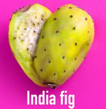 figo india ing