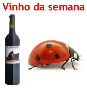 vinho semana QST
