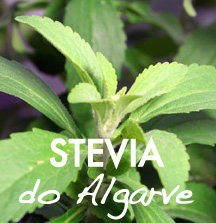 stevia do Algarve