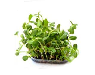 bio vivos sunflower sprouts