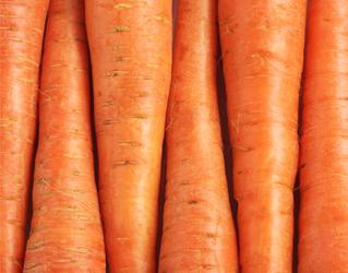carrot 10kg bag