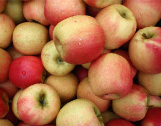 fuji apple 15kg box