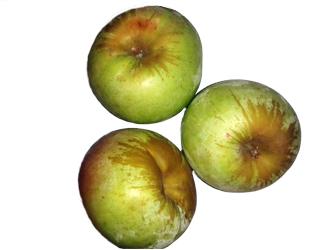 apple pêro sousa