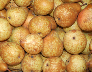 rock pear 15kgs box