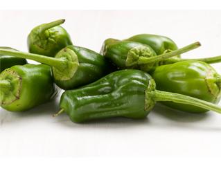 padrón pepper